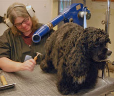 Dog being brushed by groomer